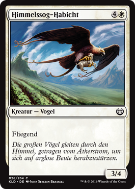 Himmelssog-Habicht
