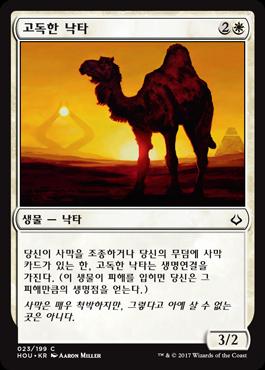 고독한 낙타