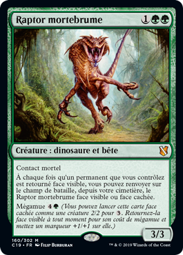 Raptor mortebrume