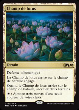 Champ de lotus