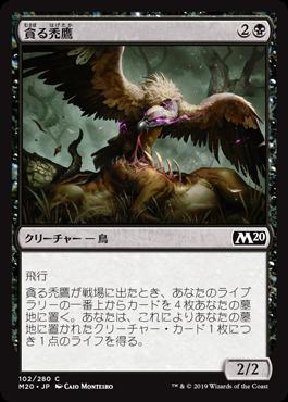 貪る禿鷹(Gorging Vulture)