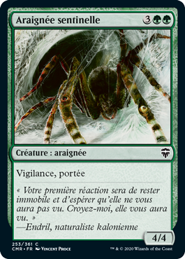 Araignée sentinelle