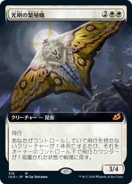 光明の繁殖蛾