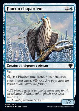 Faucon chapardeur