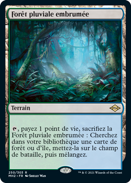 Forêt pluviale embrumée