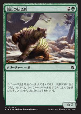 高山の灰色熊